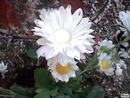 Joli Fleur