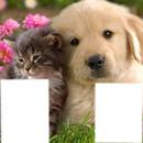 chatons et chiots trop mimi