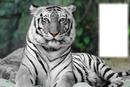 """witte tijger"""