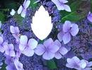 Linda flores lilas