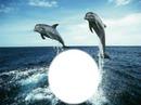 tiernos delfines 1 foto