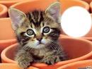 *chaton*