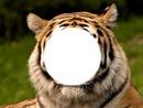 ton visage dens le tigre