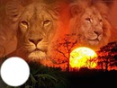 couchez de soleil deux lion