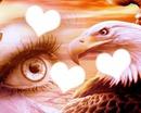 L'oeil de l'aigle