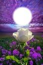 FLOWER IN HEAVEN