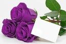 roses prune