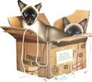 gatos siames caja frame marco
