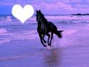 cheval du coeur