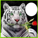 tiger with rose
