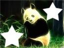 panda loulou amine