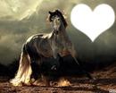 chevale gris