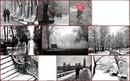 Trés beau paysages d'hiver