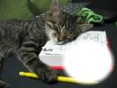 Chat-animal-sieste