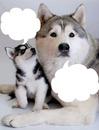 maman et bébé husky 2 photos cadres