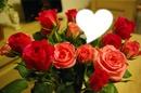 les roses du coeur