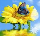 farfalla girasole