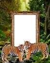 Cc Tigres y mi retrato
