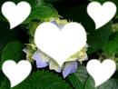 la fleur est cette amour qui nous unis