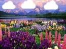 paysge montagnes et fleurs