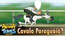 corrida de cavalo