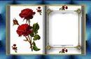 livre de roses