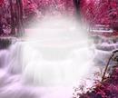 cascade rose 2
