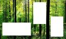 3 fotos in het bos