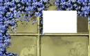 cadre fleurs bleue