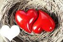 couple de coeur dans un nid