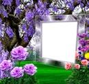 lily-jade*