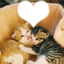 des chatons