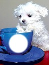 Cup and Dog