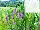 Cadre Nature & fleurs