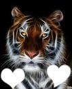 tigre avec coeur