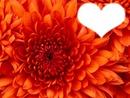 La fleur du coeur