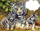 tigres 1 photo