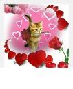 chat avec rose et coeurs 1 photo