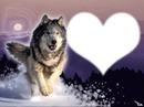 coeur loup