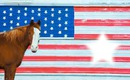 cheval étoile