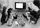 TV pour chiens