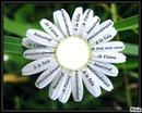 la fleur pour une merveilleusse