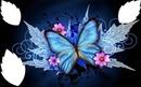 papillon bleuavec fleurs  3 photos