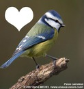 l oiseau de l amour