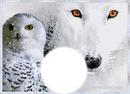 hibou et loup