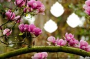 branches de magnolias