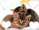les tit chatons