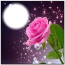 PINK ROSE BB