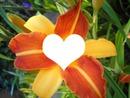 cadre fleur lys
