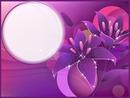 cadre violetta .gaetana